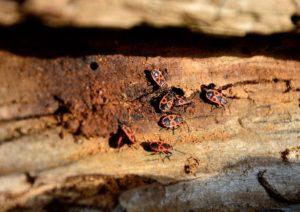 pest infestation
