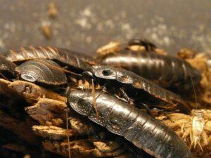 in-house pest infestation